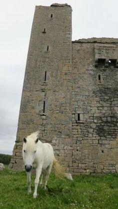 'Betsy' at Ballinalacken Castle, Doolin, Ireland.