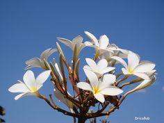 Flores...