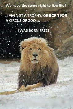 Born free...they deserve to BE free.