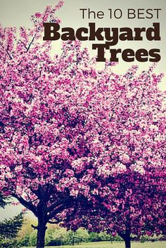 If you're choosing a tree to plant in your yard, think carefully. A tree is a decades-long investment so it's important to find one that you can maintain and that will work for your region and house style. 10 of the Best Trees for Any Backyard Backyard Trees, Landscaping Trees, Large Backyard, Garden Trees, Front Yard Landscaping, Lawn And Garden, Landscaping Software, Landscaping Company, Landscaping Design