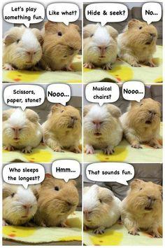- Perfekt for guinea pigs! LOL