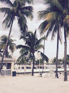 #KeyWest #Palms #iPad #Wallpaper http://stilbox-Studios.com #Beach #Sun #Sunshine #Sun #Sea #Ocean #Florida #USA #stilboxstudios
