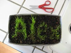 Line a box with plastic wrap and fill with soil (this one is a tissue box). Sprinkle grass seeds to spell childs name. Keep them in a sunny spot, water, and watch them grow! Children can trim the grass with scissors as the letters grow.