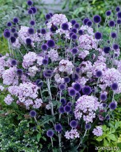 My Favorite Plant Combinations 56 (My Favorite Plant Combinations design ideas and photos - jardins - Garden Purple Garden, Colorful Garden, Beautiful Gardens, Beautiful Flowers, The Secret Garden, Plantation, Dream Garden, Garden Planning, Garden Projects