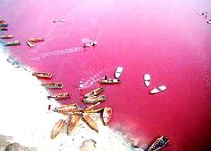 """Lake Retba of Senegal has water that is pink in color! Sometimes it turns purple depending on the effect of sunlight during the day. Rightfully people in Senegal call it """"Lac Rose"""" or the """"Pink Lake"""" Places Around The World, Oh The Places You'll Go, Places To Travel, Around The Worlds, Travel Destinations, We Are The World, Wonders Of The World, Lac Rose Senegal, Lake Retba Senegal"""