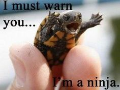 A Tiny Turtle. That's a Ninja. A Ninja Turtle. Cute Baby Animals, Funny Animals, Super Cute Animals, Wild Animals, Funny Cute, Hilarious, Super Funny, Funny Memes, Funniest Memes