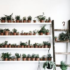 shelves of plants