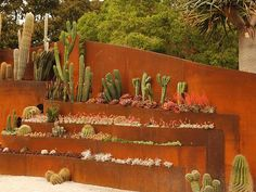 Desert feel cactus feature wall - perfect for a smaller backyard - designed by jamie durie Outdoor Rooms, Outdoor Walls, Outdoor Gardens, Outdoor Living, Outdoor Privacy, Backyard Privacy, Formal Gardens, Landscape Design, Garden Design