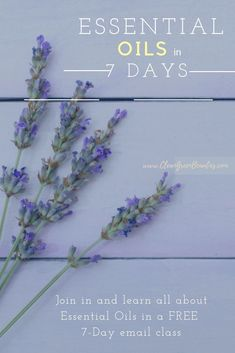 how to use essential oils in 7 days email class Essential Oil Starter Kit, Essential Oil Carrier Oils, Essential Oils For Babies, Therapeutic Essential Oils, Essential Oils For Headaches, Essential Oil Diffuser Blends, Young Living Essential Oils, Essential Oils Wholesale, Essential Oils For Depression