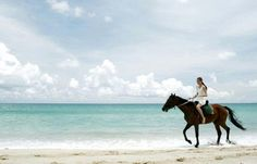 go horse back riding on the beach with the kids