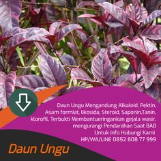 Tawk to salep ambeien Wordpress Org, Healthy Style, Planting Flowers, Natural Remedies, Health Tips, Herbalism, Health Fitness, Nutrition, Plants