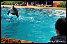 The blue waters of Dolphin Cove.