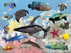 AUSTRALIA / OCEANIA MONTESSORI RESOURCE PACK - Montessori NatureFacebookGoogle+InstagramPinterest