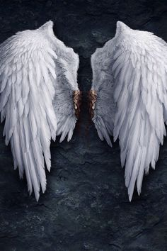 #feathers angel wings
