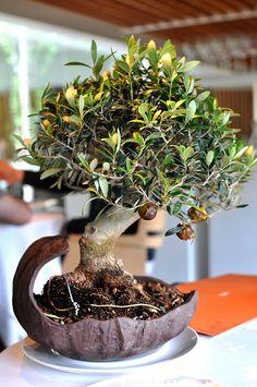 Caramelized Olives - El Celler de Can Roca