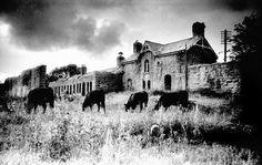 Abandoned Railway Station, Belturbet, Co Cavan, Ireland Abandoned Train, Abandoned Buildings, Time And Tide, Cemetery Art, Sight & Sound, Irish Eyes, Local History, Travel Bugs, Ireland Travel