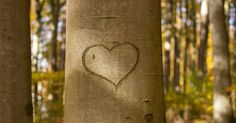 Despre iubire (continuare)