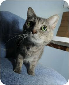 This is Egg !http://www.adoptapet.com/pet6967895.html