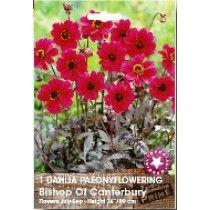 Dahlia Bisop of Canterbury