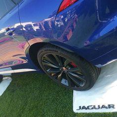#jaguar #polymass #design #custommade #bedifferentitaly #tuscany #madeinitaly #alphabet