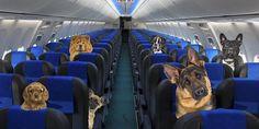¡Entérate! Perros y gatos podrán viajar en la cabina del avión. http://perrocontento.com/2015/01/perros-y-gatos-podran-viajar-en-la-cabina-del-avion-enterate/?utm_content=buffer4229a&utm_medium=social&utm_source=pinterest.com&utm_campaign=buffer