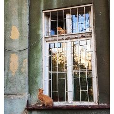 ❧ Cats in the window ❧ =^..^=