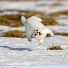 Weeeeeeeeeeeeeee! {This isn't really a quote, but it totally reminds me of my scrappy little dog Emma!}  LOL