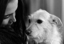 Ένας σκύλος σε μαθαίνει ν' αγαπάς Dogs, Animals, Animales, Animaux, Pet Dogs, Doggies, Animal, Animais