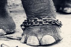 Save Circus Elephants from Cruel Working Conditions - ForceChange