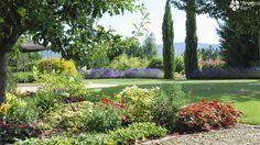 Colorfull garden with perennials. Contemporary Garden, Perennials, Golf Courses, Plants, Plant, Perennial, Planets