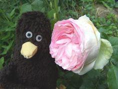 Erwin und eine schöne Rose.
