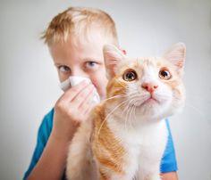Las mascotas y las alergias… ¡hay muchas soluciones! - http://befamouss.forumfree.it/?t=70748139#
