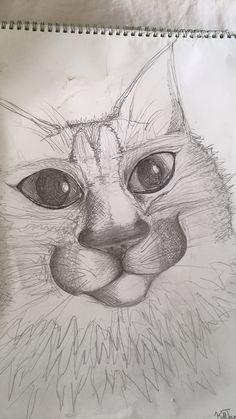 My cat Mathilda, pencil drawing done at home in sketch book.