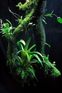 Die 417 Besten Bilder Von Terrarien Florarium Pflanzen Vivarium