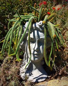 1000 images about head planters on pinterest head planters planters and succulents - Medusa head planter ...