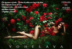 COLABORADORAS YOHELAVA & ALEJANDRO Aún hay rosas en el jardín Y vibran los pétalos con el roce de tus labios. Aún se desprende el aroma del amor Vital para tu alma Aún habitas mi corazón entre latidos de terciopelo… fragilidad humana. Yohelava