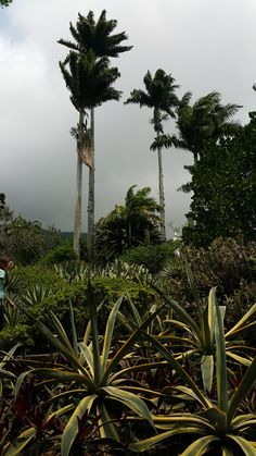 """Tour of """"Sitio"""" Roberto Burle Marx (gardens) in Guaratiba Cafe Rio, Bed And Breakfast, Brazil, Gardens, Tours, In This Moment, Explore, World, Places"""