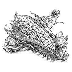 Pen & Ink Illustrations- Food & Beverage - KeithWitmer.com