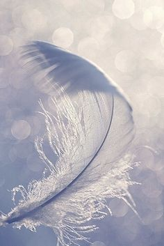 Feather iPhone Wallpaper http://htctokok-infinity.hu , htp://xperiatokok-infinity.hu