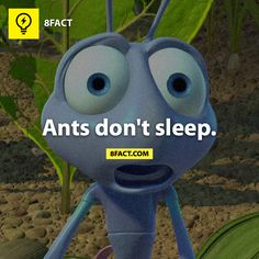 Ants don't sleep DID YOU KNOW