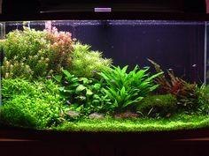 Comment fait-on pour nettoyer un aquarium ?
