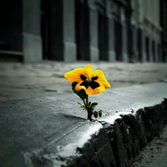 All alone in its beauty. Found on G+, Raci R.