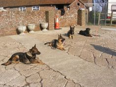 Looking for a career in canine security? Why not join our next training course for Security Dog Handlers, - Nov 2012 Training Day, Training Courses, Dog Food Recipes, 18th, Waiting, Career, Join, Carrera, Dog Recipes