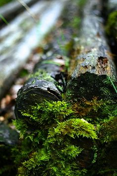 Find images and videos about nature, green and forest on We Heart It - the app to get lost in what you love. Foto Macro, Nature Sauvage, Forest Floor, Walk In The Woods, Mother Earth, Beautiful World, The Great Outdoors, Woodland, Nature Photography