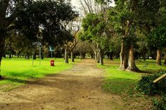Rondebosch Park is the perfect place for an afternoon stroll.