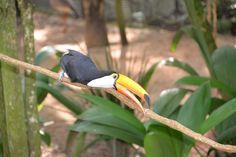 Maravilhas da fauna brasileira - Parque das Aves