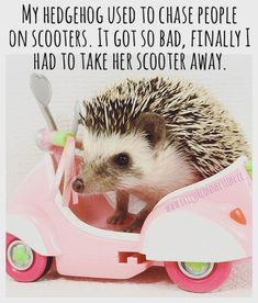 www.critterconnection.cc Hedgehog, Connection, Jokes, Lol, Humor, Funny, Cute, Animals, Animales
