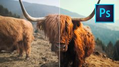 How to make your PHOTOS look CINEMATIC FAST using LUTS in Photoshop!