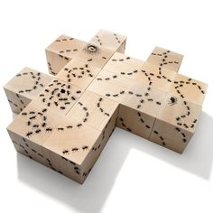 Houten blokken mieren