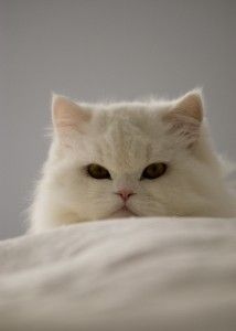 Your Cat is watching you!